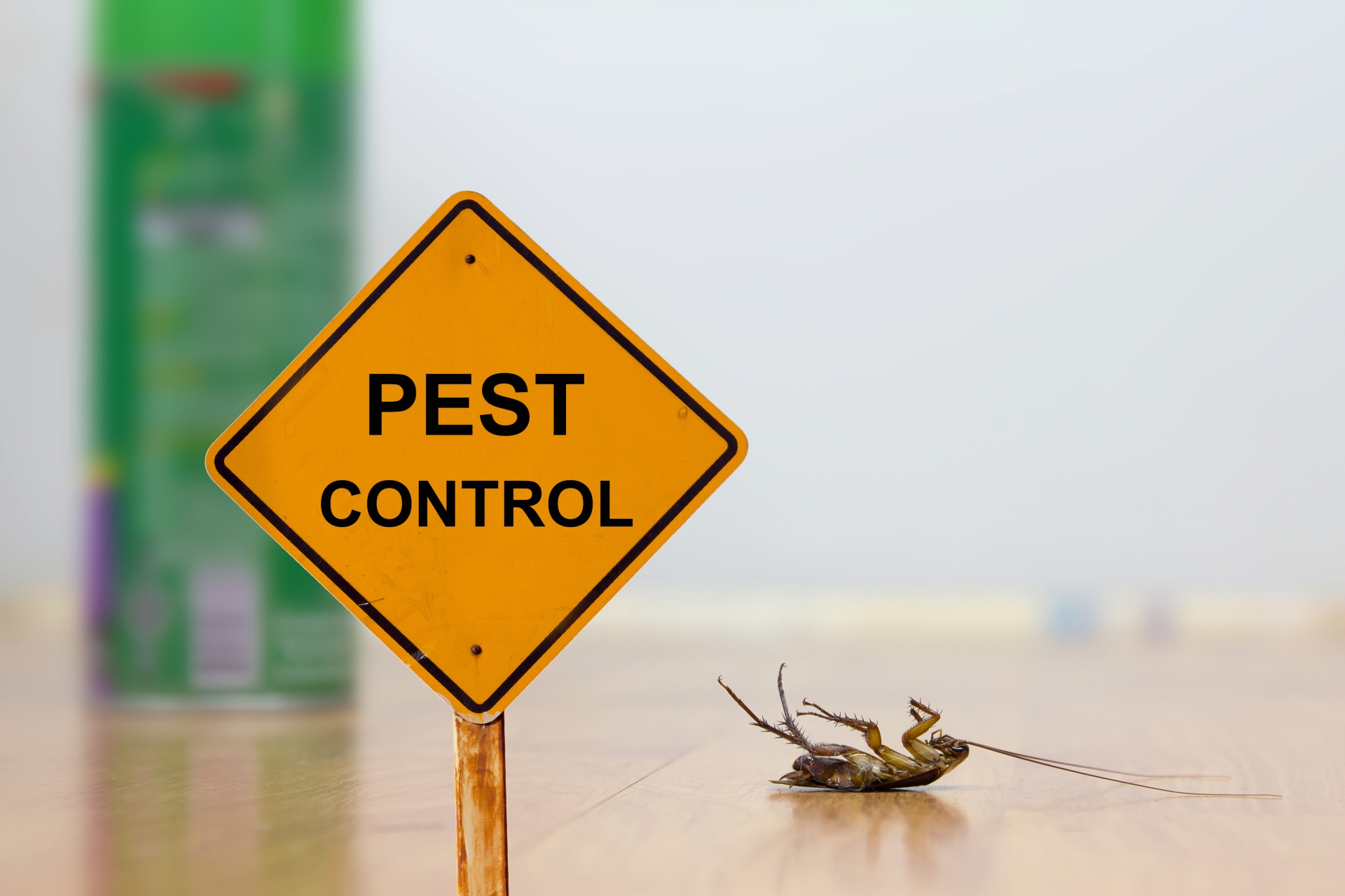 24 Hour Pest Control, Pest Control in Esher, Claygate, KT10. Call Now 020 8166 9746